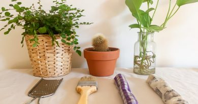 Image is of three plants with tools needed to create beeswax wraps (paintbrush, grater and fabric pieces).