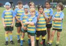 WASPs Forest Lake Junior Rugby Union Club