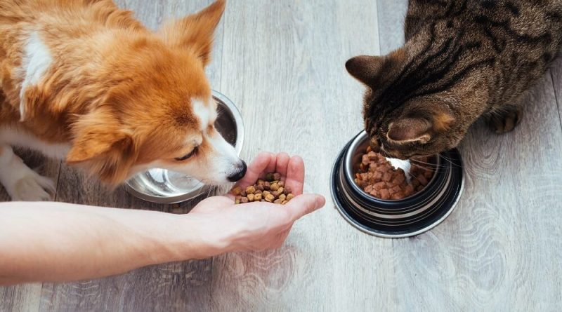 RSPCA's Home Alone service can help give peace of mind these holidays